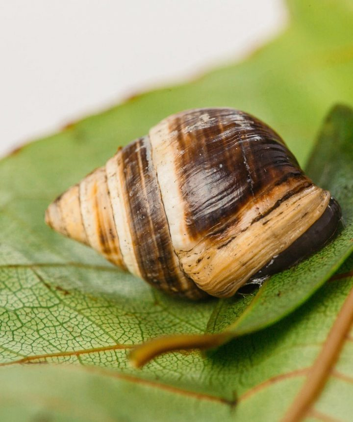lonesome-george-snail